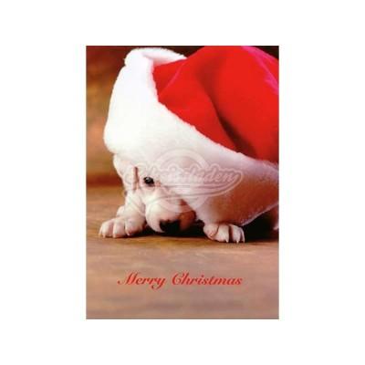 """Postkarte Weihnachten """"Merry Christmas"""" - Hund - von Modern Times - scheissladen.com"""