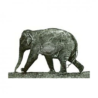 "Postkarte ""Elefant Muybridge"""